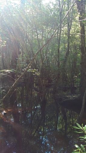 P blog swamp