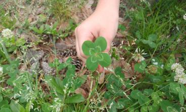 Lucky clover wm